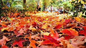 7 autumn gardening tips